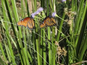BotanicalGardenButterfly-300x224